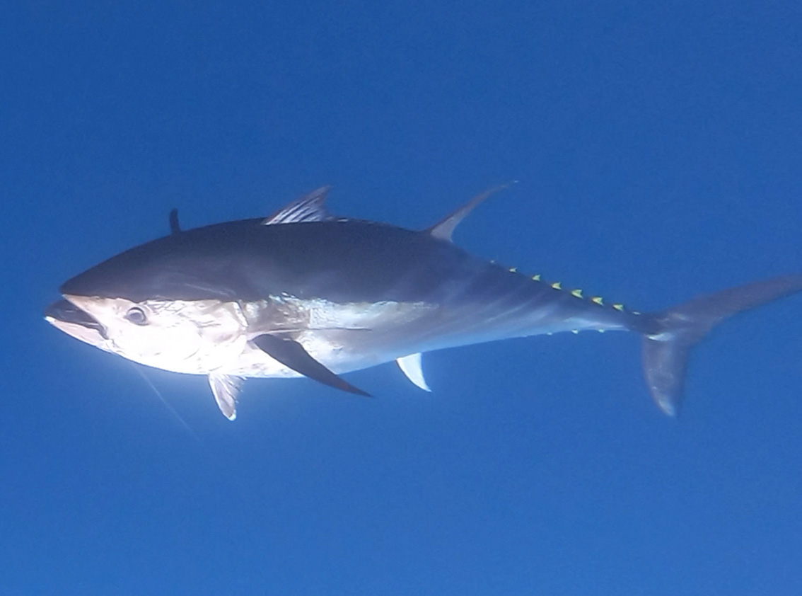 Fishing in Mallorca: High-end fishing gear